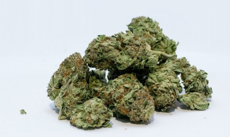 cannabis-buds